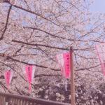 桜が散る前に!可愛く桜を撮ろう📷🌸♡